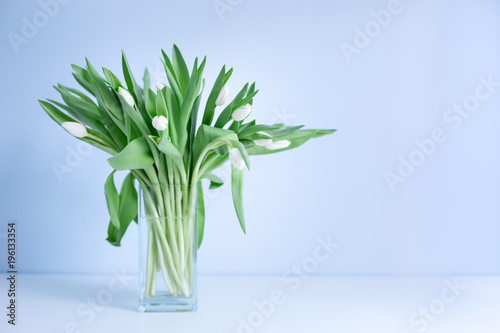 Bouquet of tulips in glass vase on blue pastel background