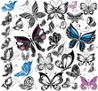 Big collection of butterflies. Vector