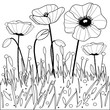 Poppy flowers. Black and white coloring book page