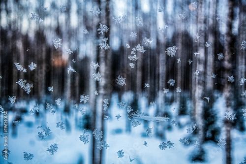 Fotobehang Abstractie Frozen snowflakes in winter on the glass