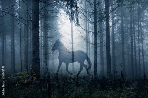 Fototapeta Horse in the fantasy dark fairy tale forest landscape. Double exposure technique used.