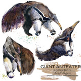 Giant anteater hand drawn watercolor illustration set