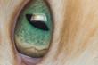 eye cats close-up