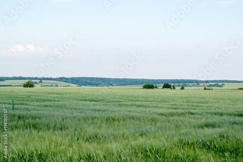 Foto op Canvas Olijf Field in the Russian nature