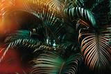Deep dark green palm leaves pattern with bright orange sun flare effect. Creative layout, toned, horizontal - 196182941