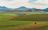 Newly planted wheatlands of the Western Cape Province - 196189767
