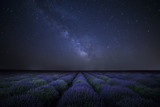 The Milky Way galaxy rising above lavender field - 196193977