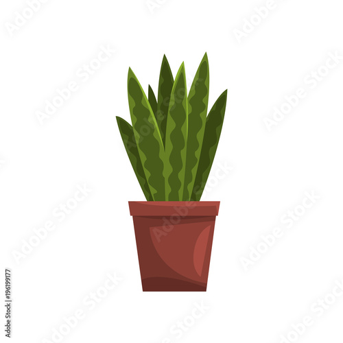 Foto op Canvas Cactus Snake indoor house plant in brown pot, element for decoration home interior vector Illustration on a white background