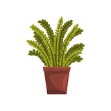 Fern indoor house plant in brown pot, element for decoration home interior vector Illustration on a white background