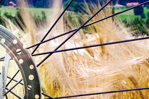 Fahrradfahren über Land; Nahaufnahme einer Scheibenbremse, im Hintergrund ein Gerstenfeld