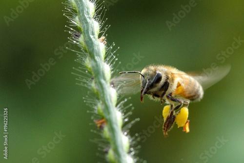 Fotobehang Bee Heyyy!!!