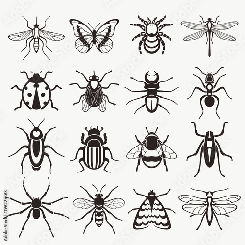 Insects  - 196227363