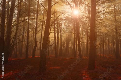 Fotobehang Betoverde Bos Wald Forst Morgennebel Neblig Sonnentrahlen düster Forstwirtschaft romantischer Nadelwald