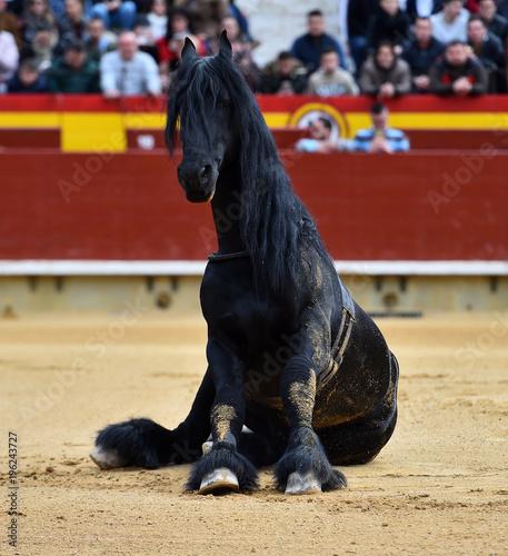 Fotobehang Paarden horse