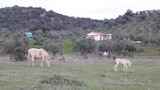 Mare and a foal grazing in a field of olive trees - 196255317
