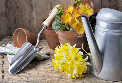 shovel and watering can with primrose and daffodils on rustic wooden background