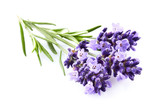 Lavender flowers on white background - 196297546