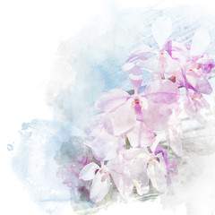 Illustration of beautiful blossom orchid.