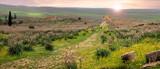 Volubilis, Roman city of antiquity in Morocco - 196313174