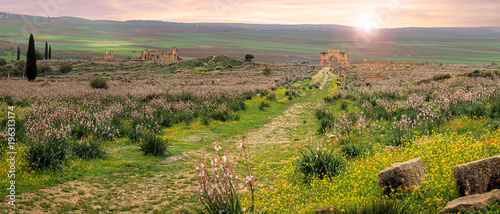 Foto op Canvas Rome Volubilis, Roman city of antiquity in Morocco