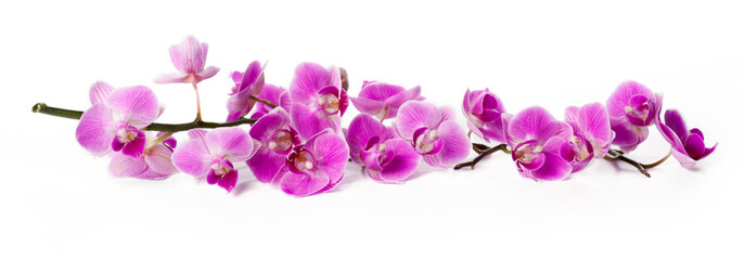 orchid isolated on white © fotofabrika