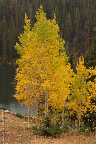 Foto op Canvas Bergen Bloods Lake at Guardsman Pass Road near Salt Lake City in Utah in the USA