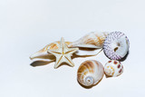 Gifts and seashells - 196324104