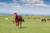herd of horses in the field