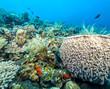 Coral reef off coast of Bali