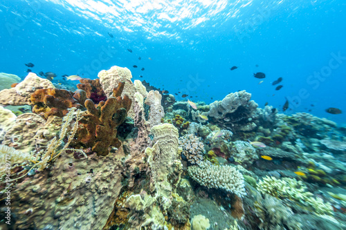 Foto op Canvas Olijf Coral reef off coast of Bali