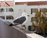 The seagull near the ocean in Portugal - 196337972