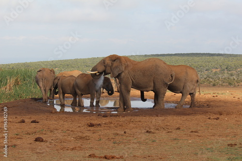 Fototapeta africa safari