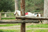 Stable wooden fence, horses in background - 196350975