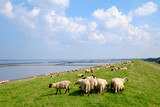Schafe auf dem Deich - 196352782