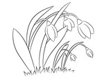 Spring flowers Snowdrops. Coloring page, book for children and adults. Hand drawn. Vector illustration