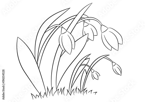 Fototapeta Spring flowers Snowdrops. Coloring page, book for children and adults. Hand drawn. Vector illustration