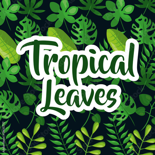 Fotobehang Vintage Poster Tropic leaves background with frame for your text. texture vector.