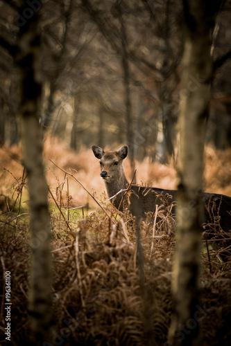 Aluminium Hert Deer in the woods