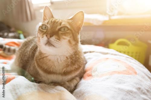 nieszczęśliwy gruby kot