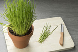 Terracotta  pot with fresh chives - 196376338