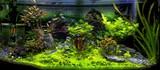 Aquarium et poissons tropicaux - 196378179