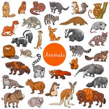 Wild Mammals Animal Characters Big Set Sticker