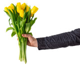 man's hand hold bouquet of yellow tulip. love symbol. isolated