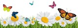 background with butterflies, daisies, grass - 196384764