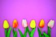 Leinwanddruck Bild - red and pink tulips.flower background
