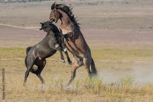 Aluminium Paarden Wild Horses