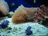 beauté sous-marine - 196416752
