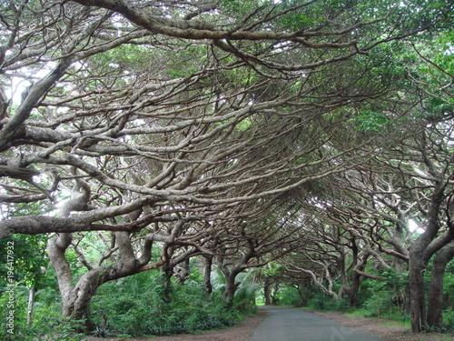 Tuinposter Weg in bos révérence