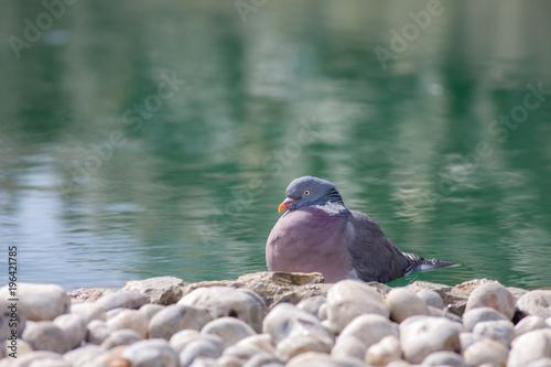 Foto op Canvas Zen Zen garden serene nature image. Serene bird by ornamental pond.