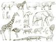 Safari wildlife animal sketch drawing set illustration